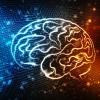 Verloren gewaand hersengebied feitelijk nooit helemaal weggeweest