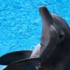 Wetenschappelijk bewezen of niet: ervaringsdeskundigen zweren bij dolfijntherapie