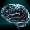 Verschil in hersenvolume verklaart waarom mannen vaker autisme hebben dan vrouwen